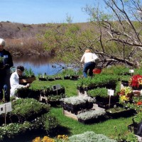 35th Annual Plant Sale & Herb Luncheon