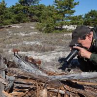Sandy Neck Field Studies Series: Nature Photography on Sandy Neck
