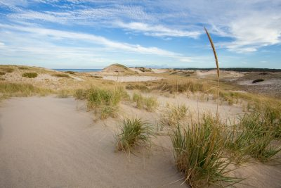 A Sea of Sand and Grass