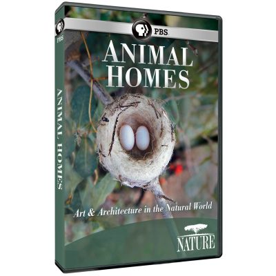 primary-Nature-Screen-presents--Animal-Homes--a-Trilogy-of-PBS-NATURE-Documentaries-1486149304