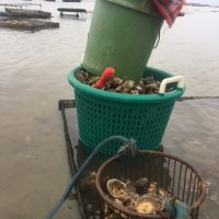 primary-Aquaculture-with-Oysters-with-Jason-Weisman-1489424436