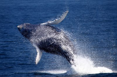 primary-First-Day-of-Summer-Whale-Watch-1489089093