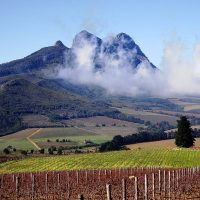 FOOD & WINE OF STELLENBOSCH SOUTH AFRICA with Chef Joseph Cizynski