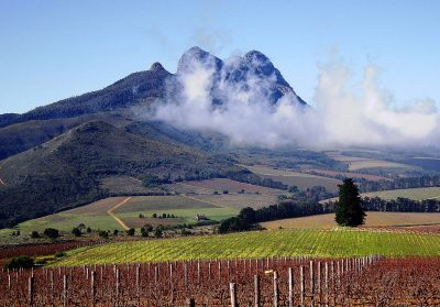 FOOD & WINE OF STELLENBOSCH SOUTH AFRICA with ...