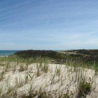 SANDY NECK BEACH: ART MEETS NATURE PROGRAM