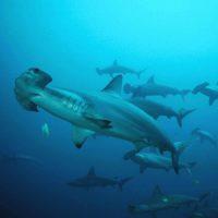 "Nature Screen presents ""Shark Mountain"""