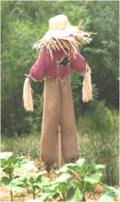 Create Your Own Scarecrow