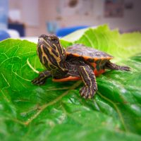 The Cape Cod Museum of Natural History presents Cr...
