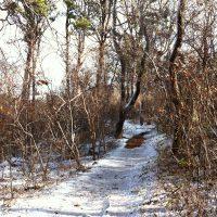 Guided Winter Family Field Walks!