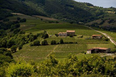 Food & Wines of Beaujolais with Chef Joe Cizyn...