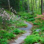 Native Plants for New England Gardens with Dan Jaffe