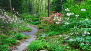 Native Plants for New England Gardens with Dan Jaf...