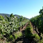The Colchagua Valley Chile with Chef Joe Cizynski