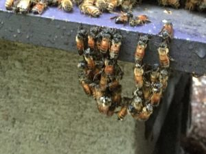 Honey Bees and Your Creative Self