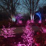 Gardens Aglow