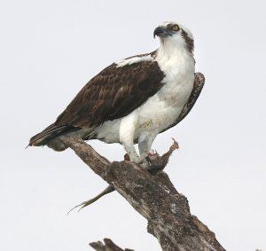 Tuesday Tweets Birdwatching Walk & Talk