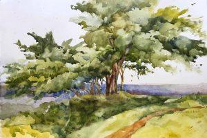 Watercolors by Judith Kamerschen
