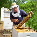 Live Bee Hive Openings!