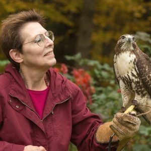 New England Birds of Prey at CCMNH!