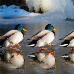 Birdwatching for Beginners Walk & Talk