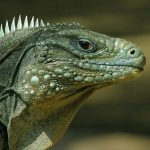 Reptiles Rock! TWO SHOWS 11am & 1pm