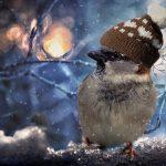 Tuesday Tweets Birdwatching Walk & Talk!