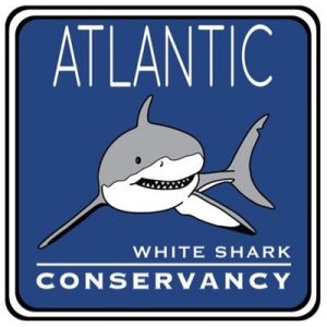 Atlantic White Shark Conservancy at CCMNH!