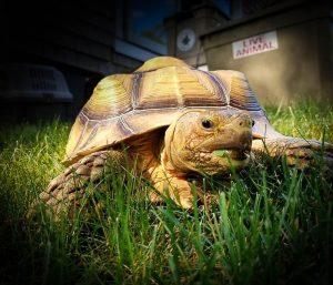 Nature Recess: Animal Adventures