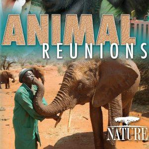 "Nature Screen presents ""Animal Reunions"""
