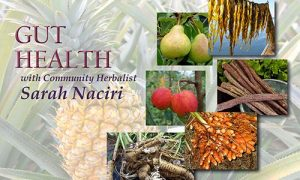 Gut Health with Community Herbalist Sarah Naciri