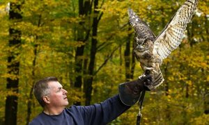 New England Birds of Prey with WINGMASTERS