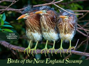 Birds of the New England Swamp