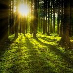 Forest Bathing: Deepening Our Relationship with Nature