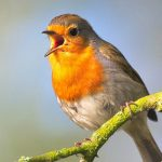 "Lunch 'n Learn presents ""Why Birds Sing!"""