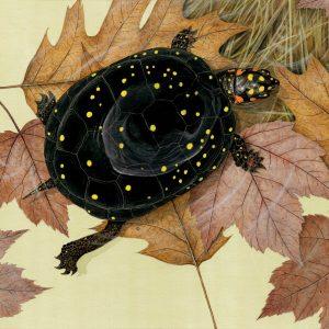 Naturescape Gallery presents Wildlife Illustrator Matt Patterson