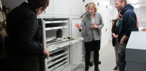 Behind-the-Scenes Collection Tour: Focus on Firear...