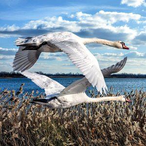 Bird Walk & Talk with Alice Wynn