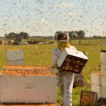 Dinner & A Movie: The Pollinators