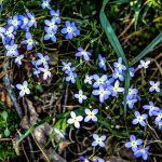 Native Plants for New England Gardens with Mark Richardson