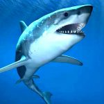 White Shark Research Update with Dr. Greg Skomal