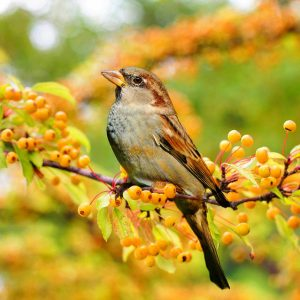 CANCELLED Landscaping For Birds, Bugs and Beyond with Mark Faherty