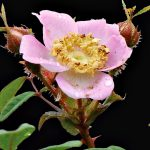 "Nature Screen presents ""First Flower"""