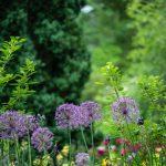 Basic but Beautiful Landscape Design, with Priscilla Husband