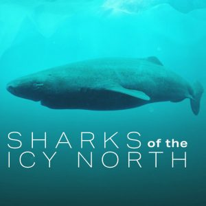 """Nature Screen presents """"Sharks of the Icy North"""""""