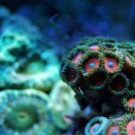Clay Exploration for 6-8 Year Olds: Undersea Adven...