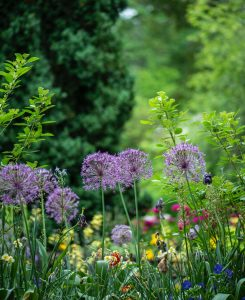 ONLINE -OR-IN PERSON: Let's Get Ready for Our 2021 Gardens! With Priscilla Husband