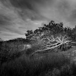 """Cape Cod Solitude,"" An Exhibition of Photographs by Rachel Jones"