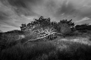"""Cape Cod Solitude,"" An Exhibition of Photogra..."