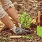 ONLINE OR IN-PERSON: Gardening 101, A Presentation...