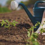 ONLINE: Gardening 101. A Presentation by Master Gardener Priscilla Husband